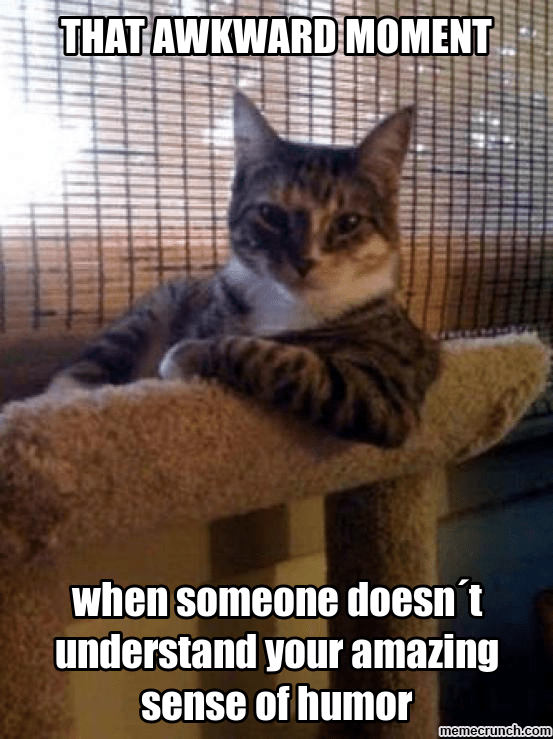 Cat - THAT AWKWARD MOMENT when someone doesn't understand your amazing sense of humor memecrunch.com