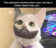 Cat - The awkward moment when your cat has a better beard than you..