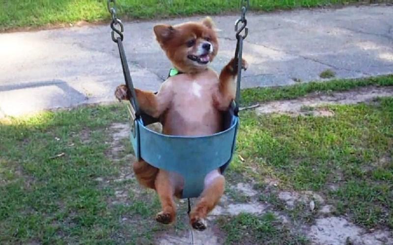 puppies in swings - Swing