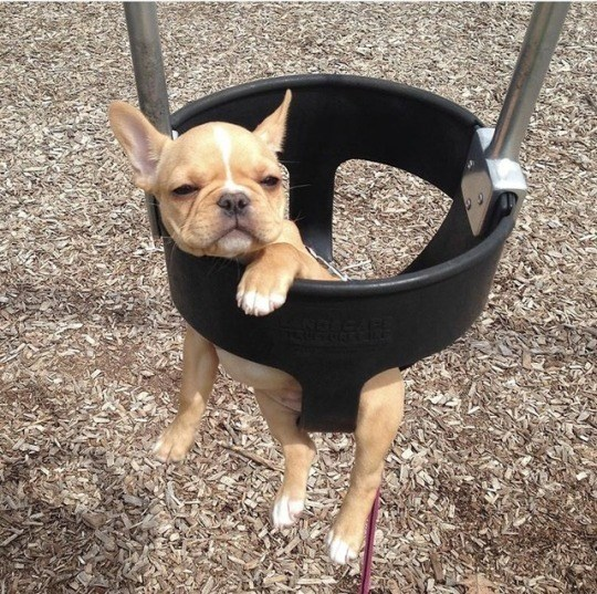 puppies in swings - Dog