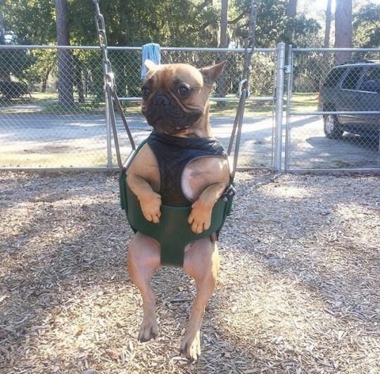 puppies in swings - Leg