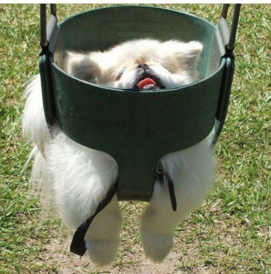 puppies in swings - Canidae