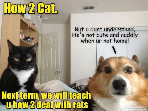 black cat looking at the camera menacingly next to an alarmed looking dog