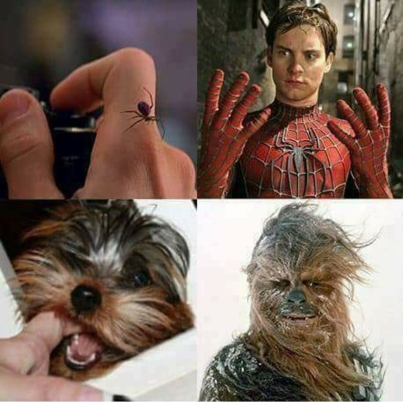 Funny meme about dog biting you and turning into chewbacca.