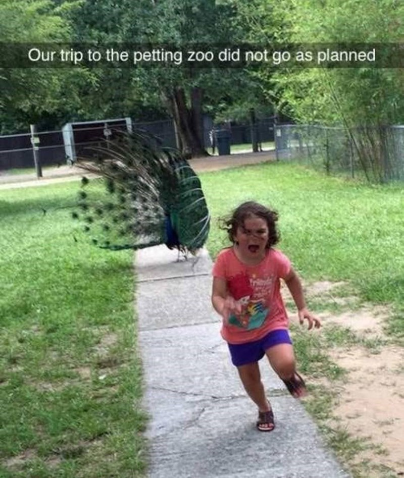 Running - Our trip to the petting zoo did not go as planned