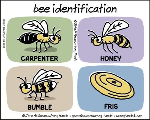 Insect - bee identification CARPENTER HONEY FRIS BUMBLE John Atkinson, Wrong Hands gocomics.comlurong-hands uronghands1.com OJohn At kinson, Wrong Hands ppnesuaun Aq 1sig
