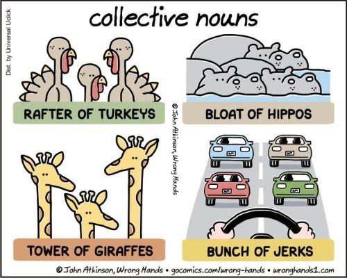 Mode of transport - collective nouns RAFTER OF TURKEYS BLOAT OF HIPPOS TOWER OF GIRAFFES BUNCH OF JERKS John Atkinson, Wrong Hands gocomics.com/rong-hands uronghandst.com OJohn Atkinson, Wrong Hands