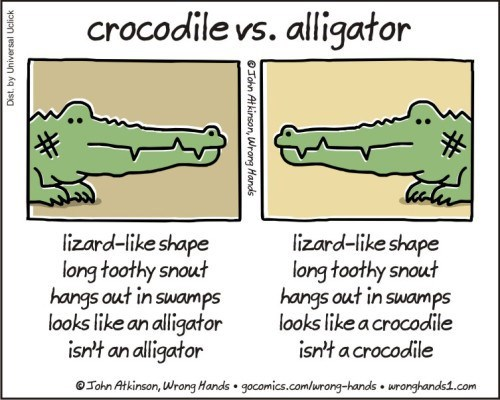 Text - crocodile vs. alligator lizard-like shape long toothy snout hangs out in swamps looks like an alligator isn't an alligator lizard-like shape long toothy snout hangs out in swamps looks like a crocodile isn't a crocodile Tohn Atkinson, Wrong Hands gocomics.comlurong-hands wronghands1.com Dist. by Universal Uclick John Atkinson, Wrong Hands