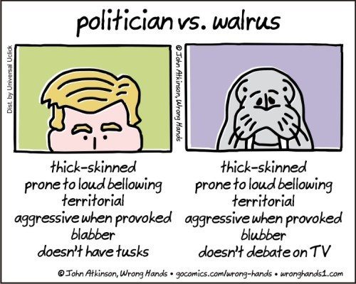 Text - politician vs. walrus thick-skinned prone to loud bellowing territorial thick-skinned prone to loud bellowing territorial aggressive when provoked blabber doesn't have tusks aggressive when provoked blubber doesn't debate on TV OJohn Atkinson, Wrong Hands gocomics.comlurong-hands uronghands.com OTohn Atkinson, Wrang Hands
