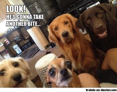 Dog - LOOK! HESGONNA TAKE ANOTHER BITE.. trololo on daylol.com raill