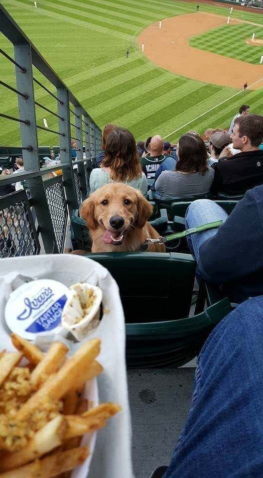 Dog - ICHIP Secits TART