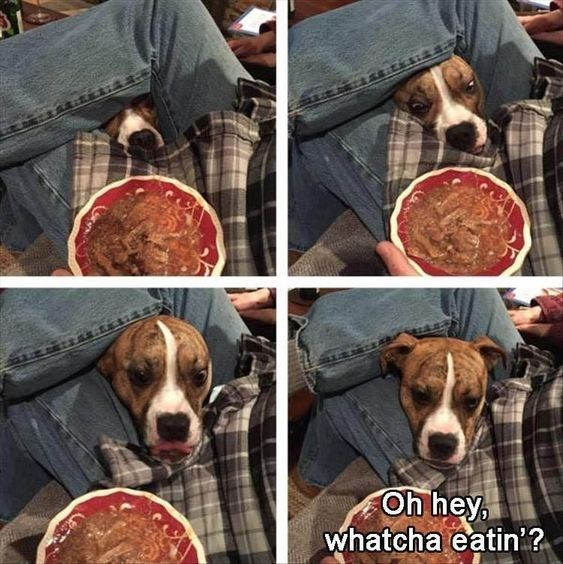 Dog - Oh hey, whatcha eatin ?