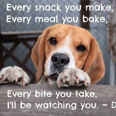 Dog - Every snack you make, Every meal you bake, Every bite yoU take, T'll be watching you.