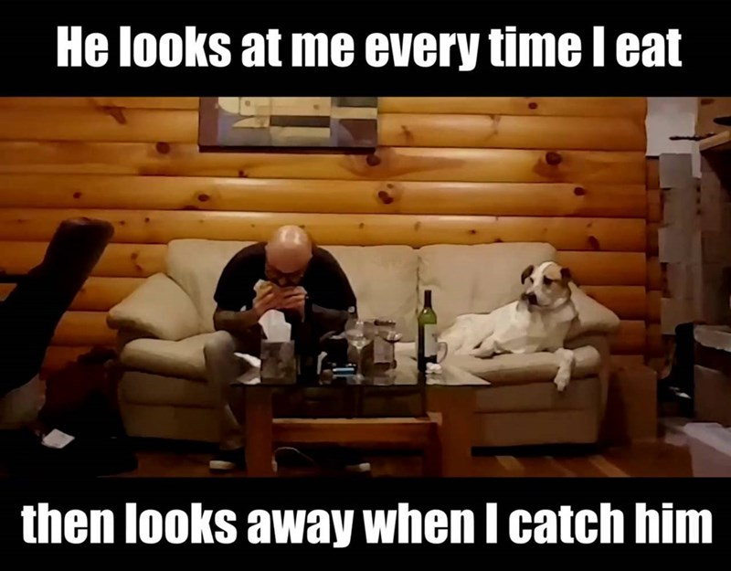 Internet meme - He looks at me every time l eat then looks away when I catch him