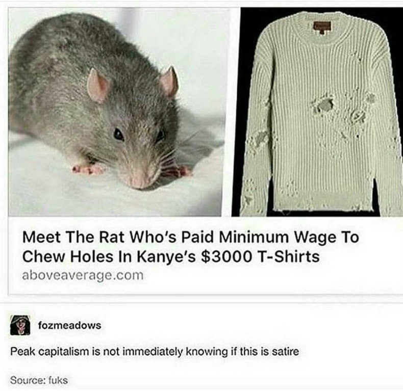 Rat - Meet The Rat Who's Paid Minimum Wage To Chew Holes In Kanye's $3000 T-Shirts aboveaverage.com fozmeadows Peak capitalism is not immediately knowing if this is satire Source: fuks