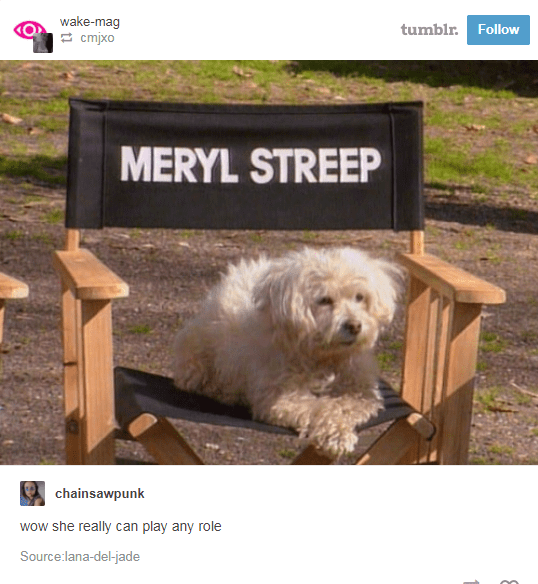 Dog - wake-mag cmjxo tumblr. Follow MERYL STREEP chainsawpunk wow she really can play any role Source:lana-del-jade