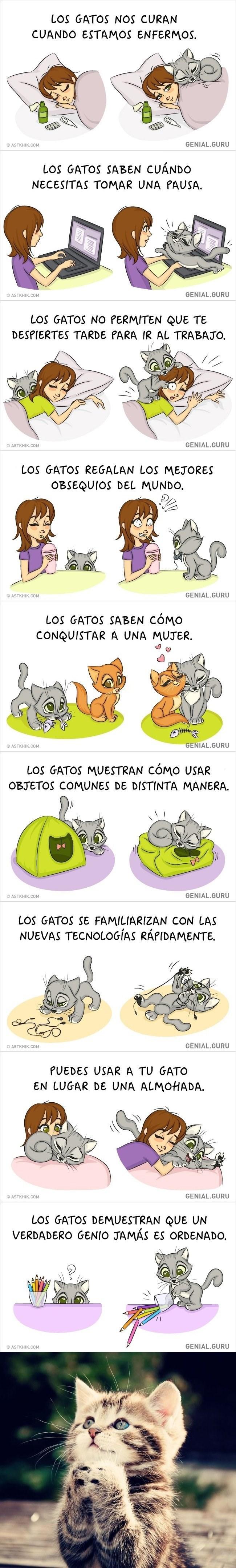 varias razones en vinetas por las que tener un gato