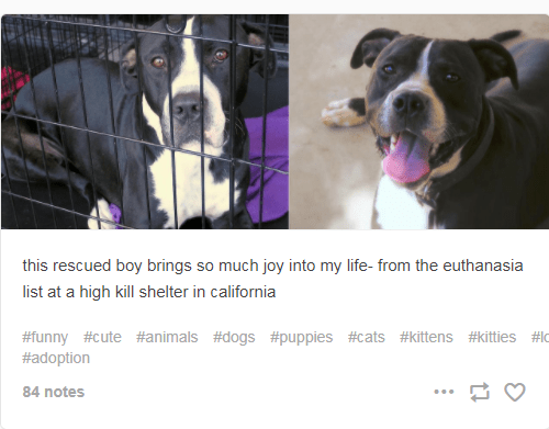 Dog breed - this rescued boy brings so much joy into my life- from the euthanasia list at a high kill shelter in california #funny #cute #animals # dogs #puppies #cats #kittens #kitties #lo #adoption 84 notes