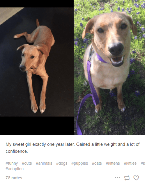Dog - My sweet girl exactly one year later. Gained a little weight and a lot of confidence. #funny #cute #animals #dogs #puppies #cats #kittens #kitties #lo #adoption 72 notes