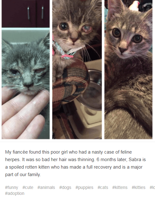 Cat - My fiancée found this poor girl who had a nasty case of feline herpes. It was so bad her hair was thinning. 6 months later, Sabra is a spoiled rotten kitten who has made a full recovery and is a major part of our family. #funny #cute #animals #dogs #puppies #cats #kittens #kitties #lo #adoption