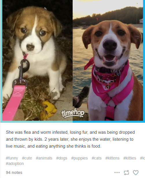 Dog - timehop She was flea and worm infested, losing fur, and was being dropped and thrown by kids. 2 years later, she enjoys the water, listening to live music, and eating anything she thinks is food. #funny #cute #animals #dogs #puppies #cats #kittens #kitties #lo #adoption 94 notes