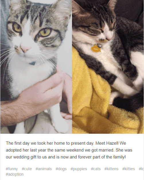 Cat - The first day we took her home to present day. Meet Hazell We adopted her last year the same weekend we got married. She was our wedding gift to us and is now and forever part of the family! #funny #cute #animals #dogs #puppies #cats #kittens #kitties #lc #adoption