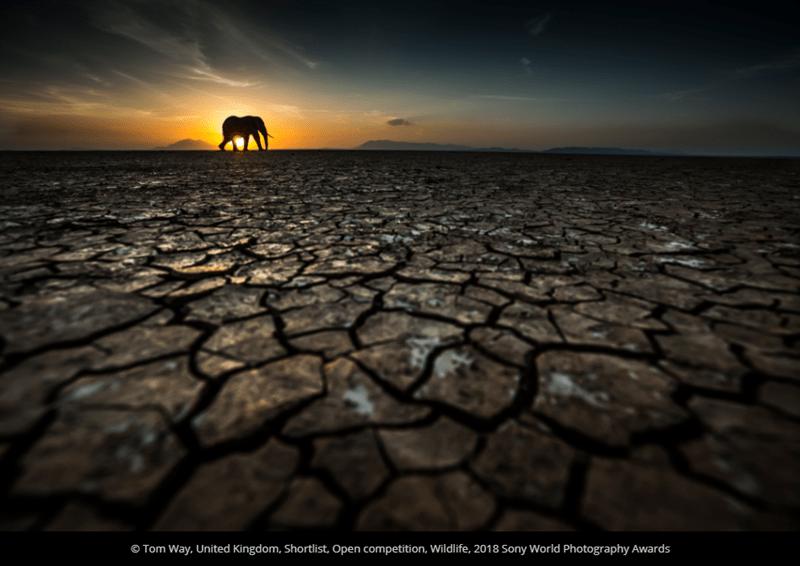 Sky - O Tom Way, United Kingdom, Shortlist, Open competition, Wildlife, 2018 Sony World Photography Awards