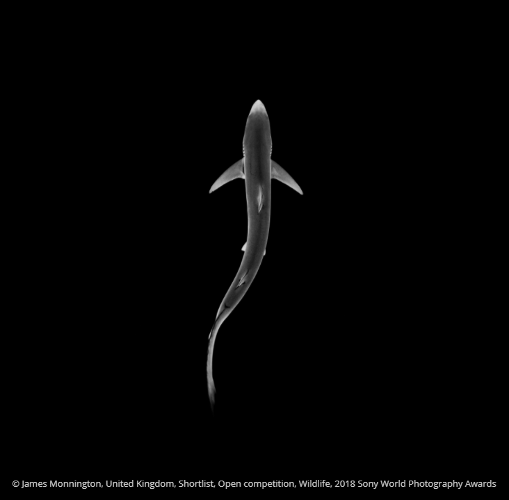 Seabird - O James Monnington, United Kingdom, Shortlist, Open competition, Wildlife, 2018 Sony World Photography Awards
