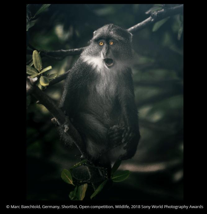 Vertebrate - O Marc Baechtold, Germany, Shortlist, Open competition, Wildlife, 2018 Sony World Photography Awards
