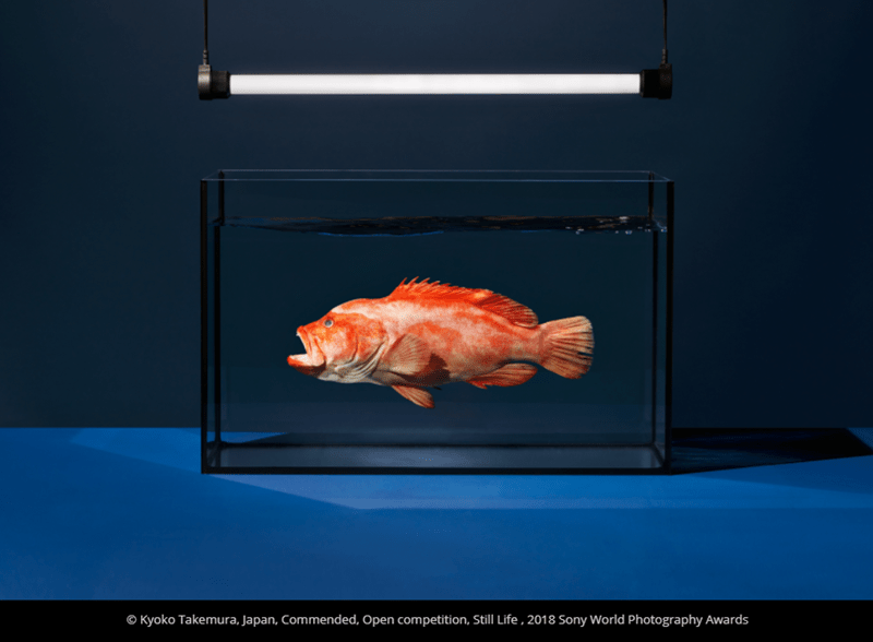 Feeder fish - O Kyoko Takemura, Japan, Commended, Open competition, Still Life , 2018 Sony World Photography Awards