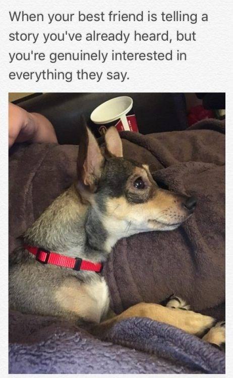 positive Thrusday meme about listening to your friend with pic of dog with its ears perked
