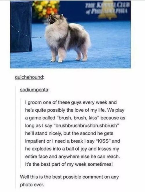 positive Thrusday meme with Tumblr post about connection between groomer and dog