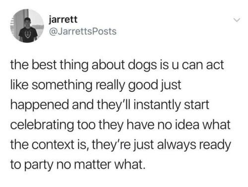 positive Thrusday meme about dogs being excitable