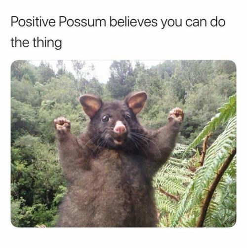 positive Thrusday meme with supportive possum cheering for you