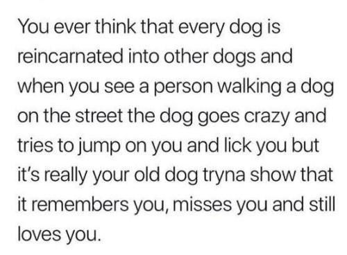 positive Thrusday meme about dogs getting reincarnated