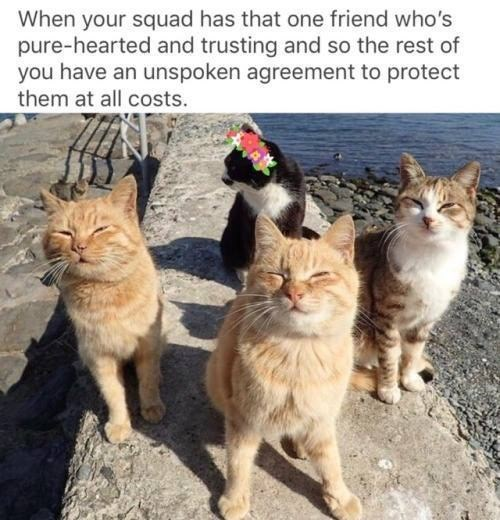positive Thrusday meme about protecting your gentle friend with pic of cats surrounding another cat