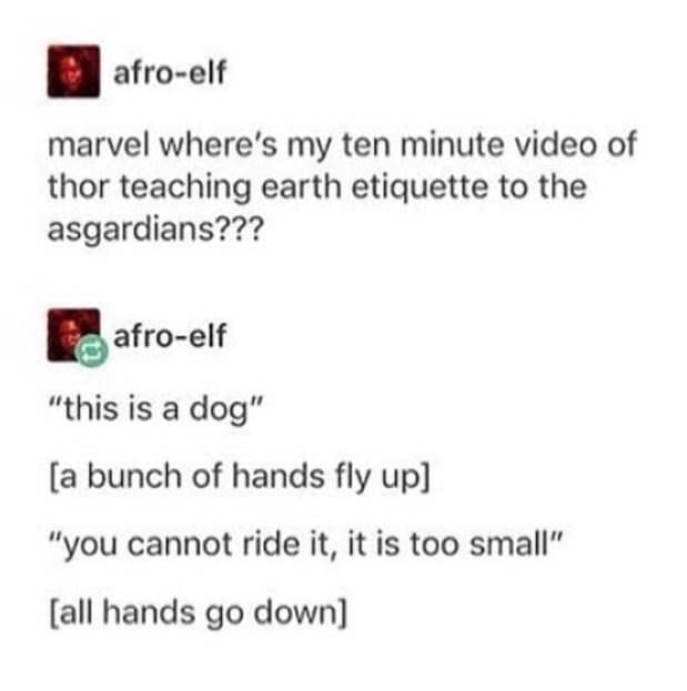 "memes - Text - afro-elf marvel where's my ten minute video of thor teaching earth etiquette to the asgardians??? afro-elf ""this is a dog"" [a bunch of hands fly up] ""you cannot ride it, it is too small"" [all hands go down]"