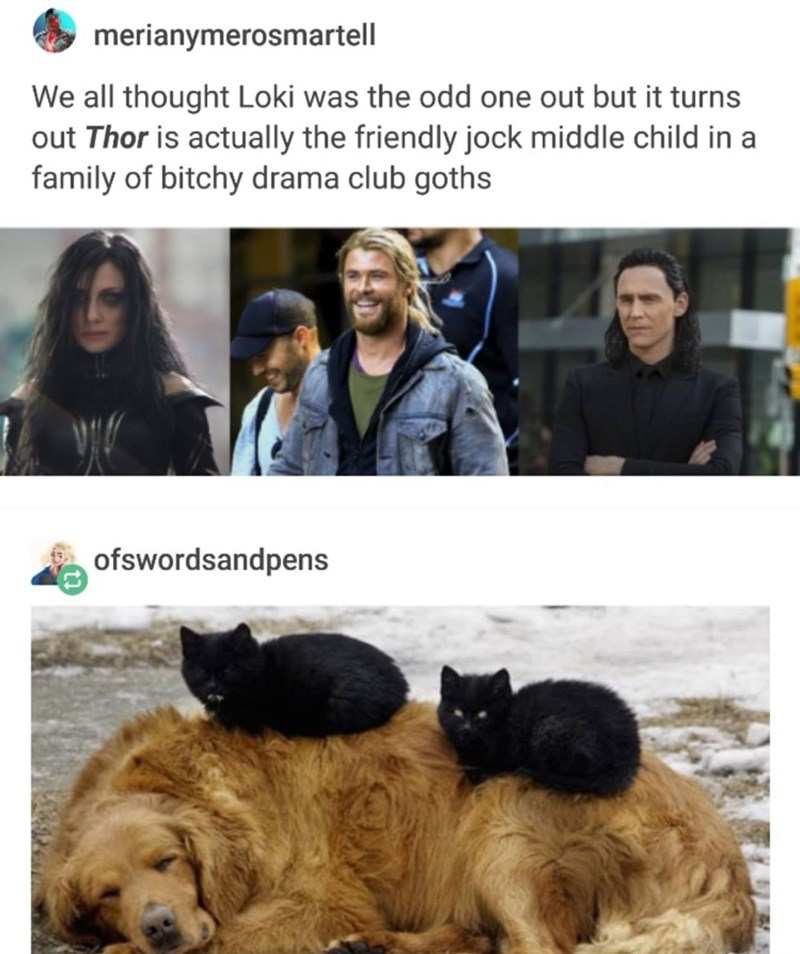 memes - Dog - merianymerosmartell We all thought Loki was the odd one out but it turns out Thor is actually the friendly jock middle child in a family of bitchy drama club goths ofswordsandpens
