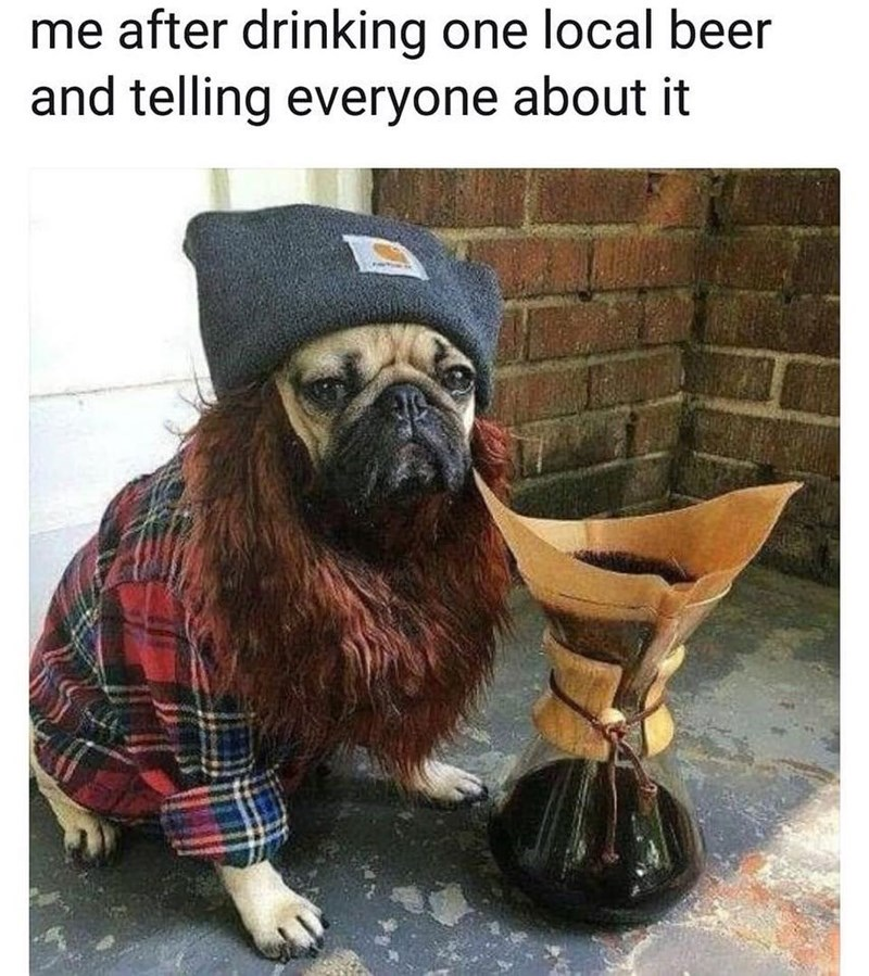 Funny meme about hipster dog.