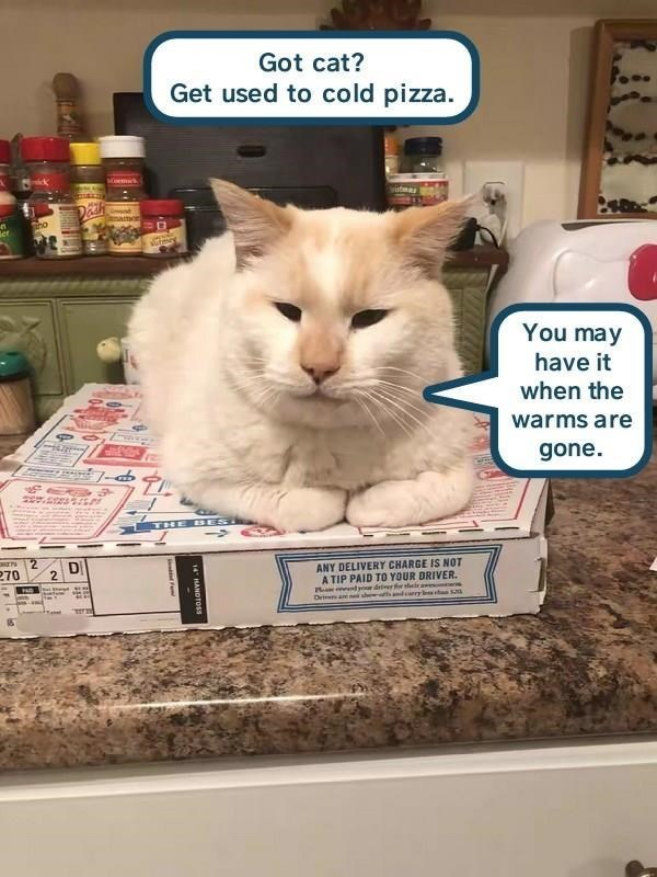Cat - Got cat? Get used to cold pizza. Karmus namor er You may have it when the warms are gone. 7- THE BESI DI ANY DELIVERY CHARGE IS NOT A TIP PAID TO YOUR DRIVER Me yr drer tlcir aweson Drivens an sh sadcarry t S 270 14 HANDTOSS