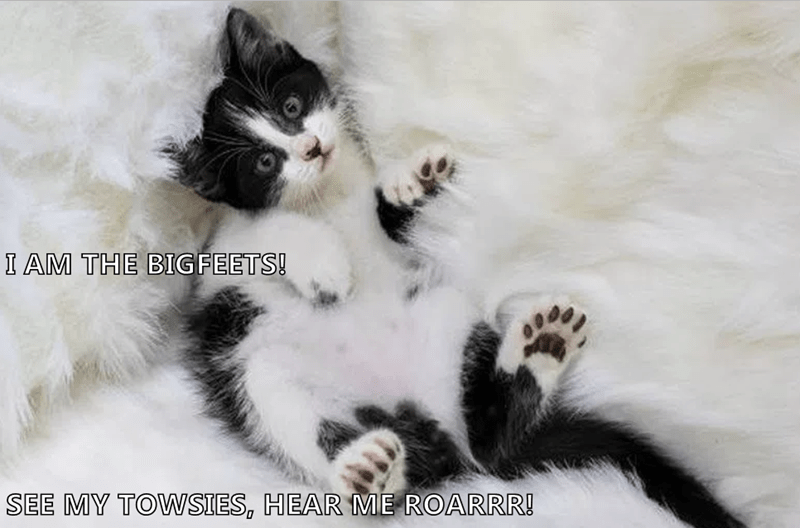 Cat - I AM THE BIGFEETS! SEE MY TOWWSIES, HEAR ME ROARRR!