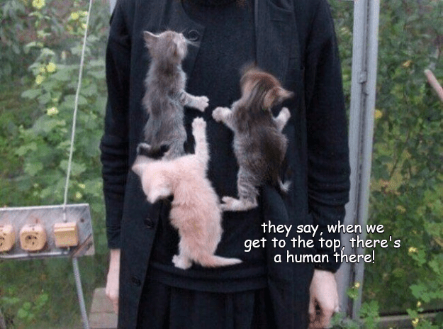 Fur - they say, when we get to the top, there's a human there!