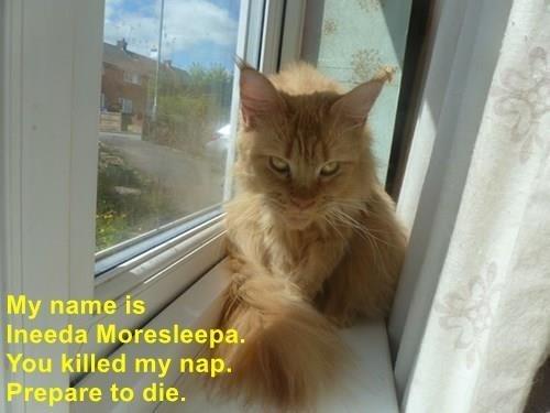 Cat - My name is Ineeda Moresleepa. You killed my nap. Prepare to die.