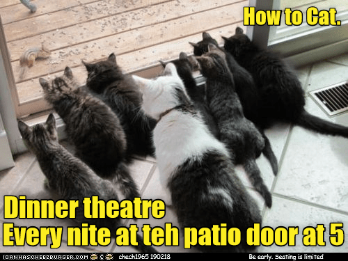 Photo caption - How to Cat Dinner theatre Every nite at teh patio door at5 CANHASCHEEZBURGER cOM chech1965 190218 Be early. Seating is limited