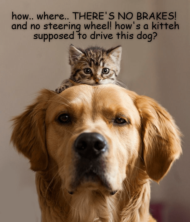 Vertebrate - how.. where.. THERE'S NO BRAKES! and no steering wheel! how's a kitteh supposed to drive this dog?