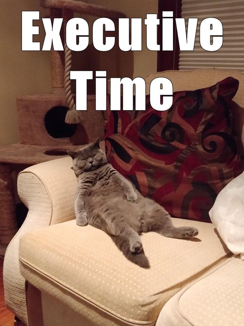 Cat - Executive Time