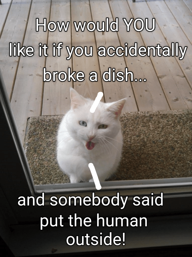 Cat - How would YOU Iike it if you accidentally broke a dish... and somebody said put the human outside!