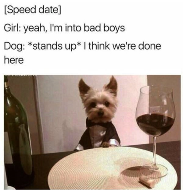 Canidae - [Speed date] Girl: yeah, I'm into bad boys Dog: *stands up* I think we're done here