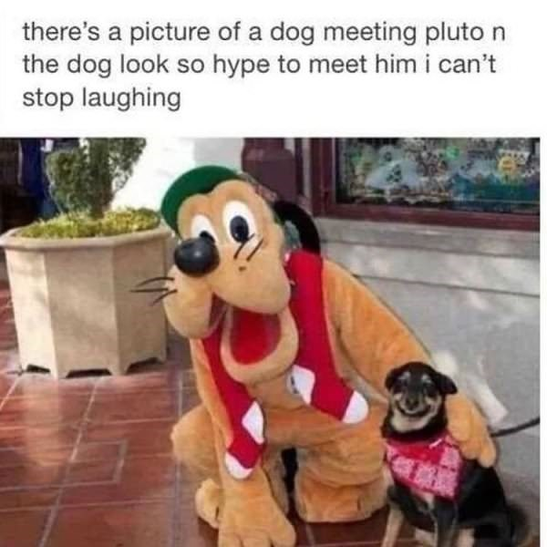 Animated cartoon - there's a picture of a dog meeting pluto n the dog look so hype to meet himi can't stop laughing