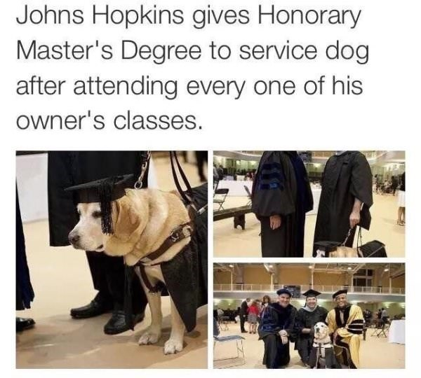 Human - Johns Hopkins gives Honorary Master's Degree to service dog after attending every one of his owner's classes.